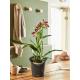 Lechuza Orchidea antracyt