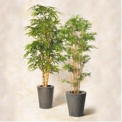 Bambus 210