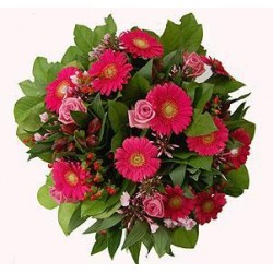 Kytica gerbier a ruží
