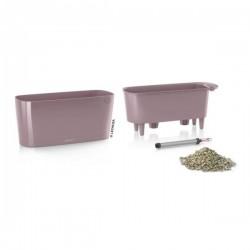 Tabletop violet